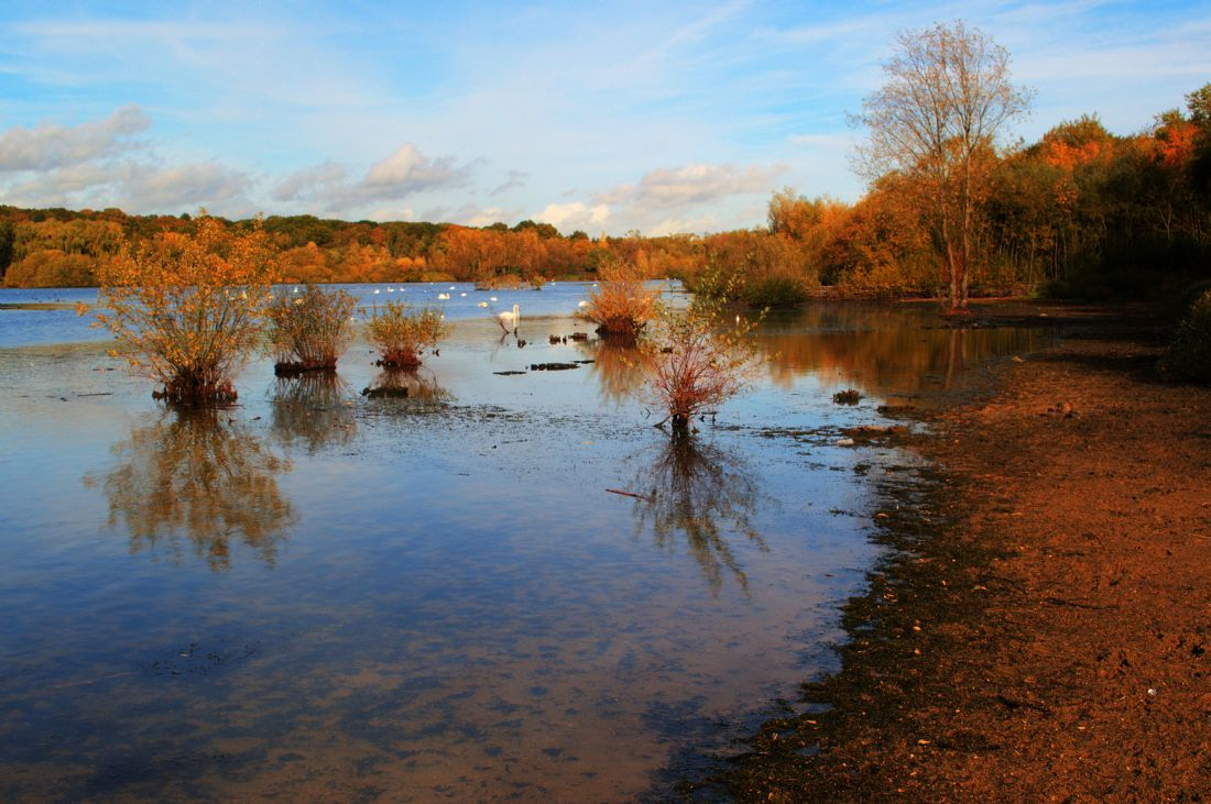 Chris Day | Autumn at Ruislip Lido