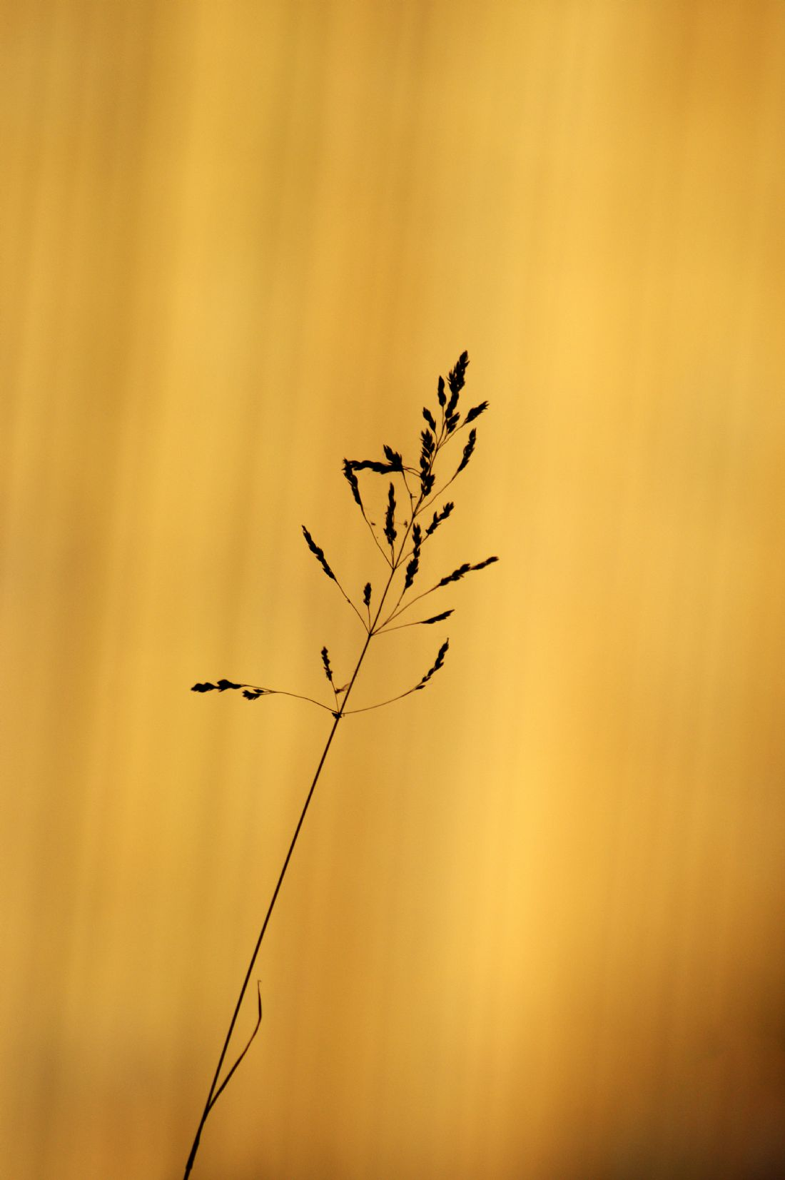 Chris Day | Grass Silhouette