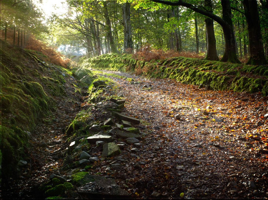 David Brookens | Sunlit Path at Buttermere