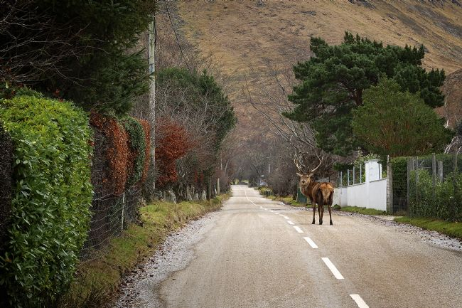David Brookens | Traffic Chaos in Lochranza