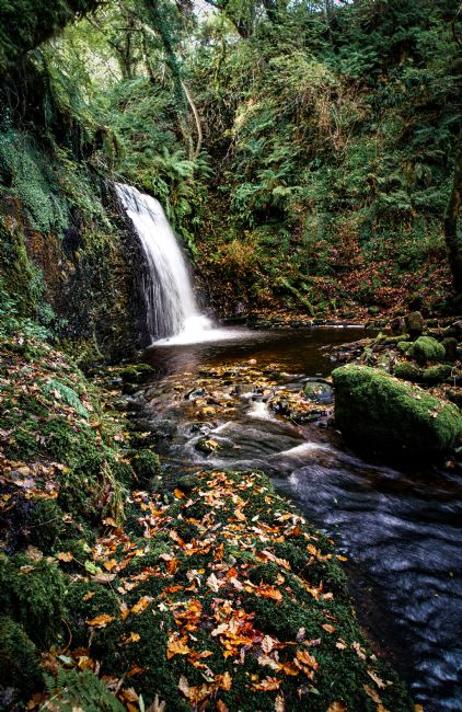David Brookens | Autumn at the Fairy Glen
