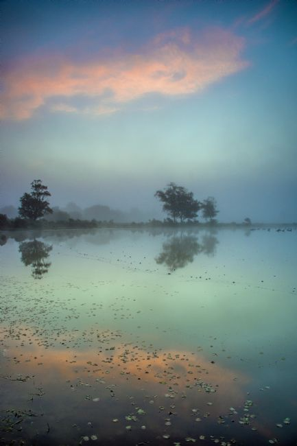 Phil Wareham | Mist at Whitten Pond
