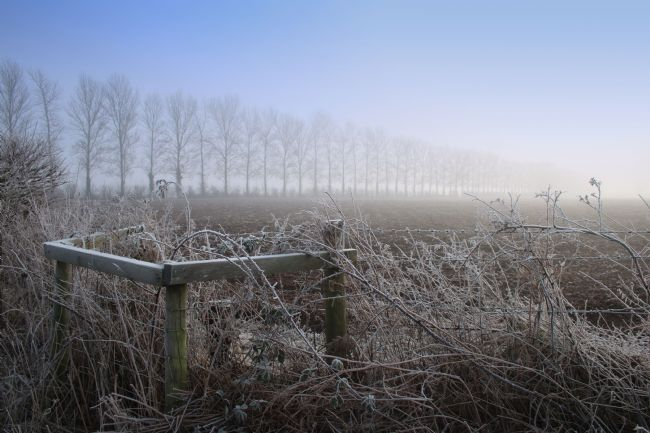 Rachel Bowler | Frosty Morning