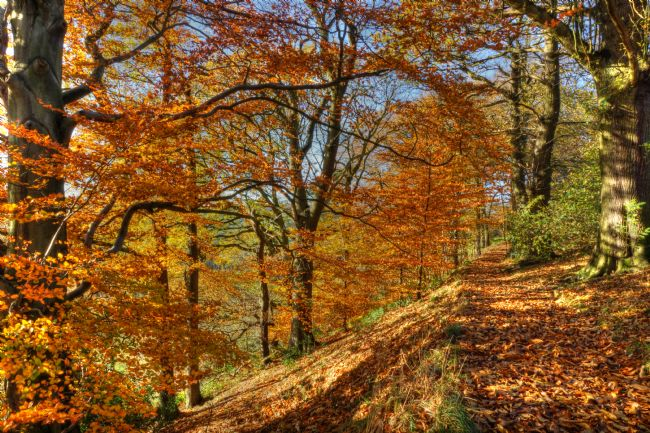 David Birchall | Autumn colour in Derbyshire