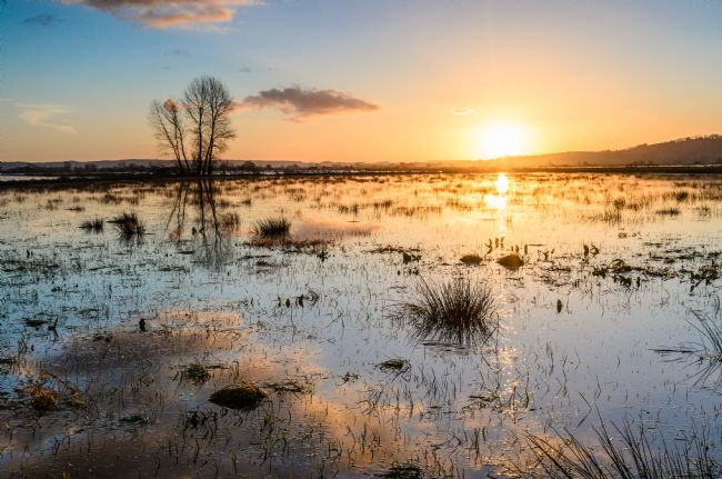 Bob Small | The Somerset Levels
