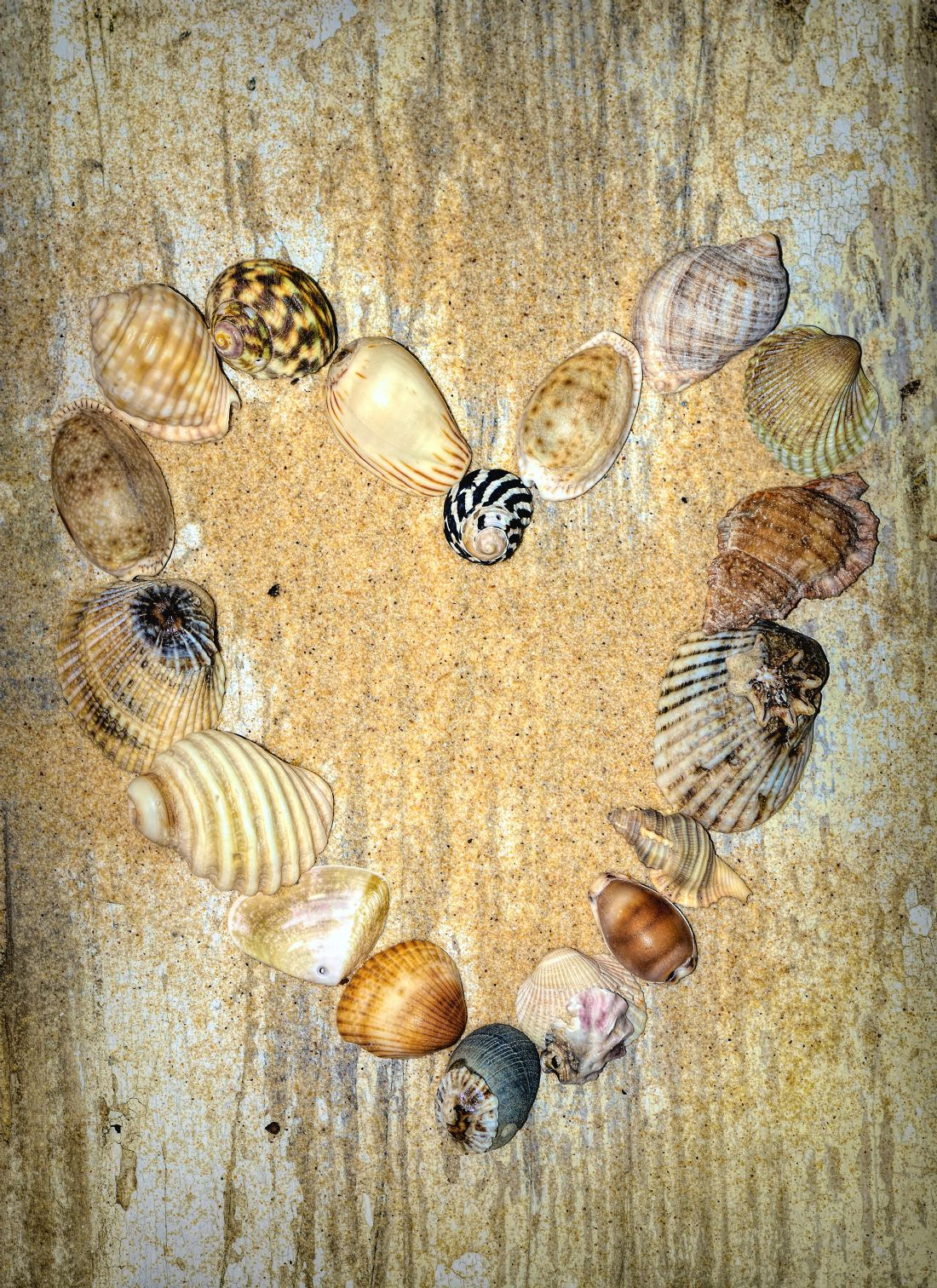 Kaye Menner | Shells of the Heart