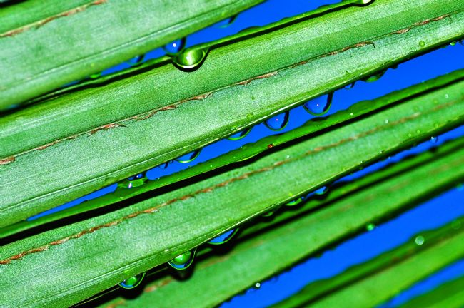 Kaye Menner | Raindrops in Blue and Green