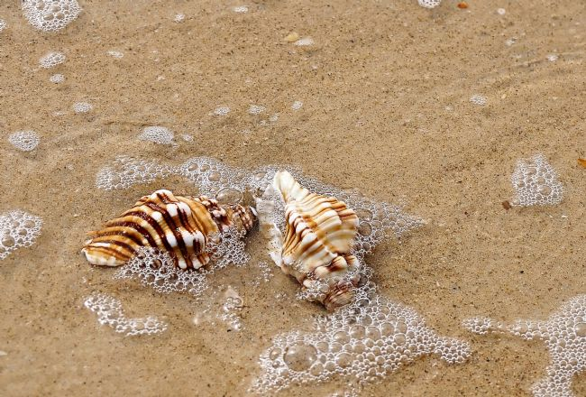 Kaye Menner | Seashells and Bubbles