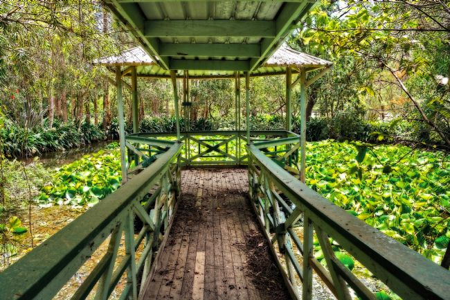 Kaye Menner | View of Lily Pads from Gazebo