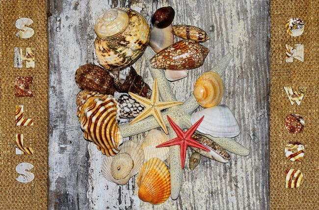 Kaye Menner | Shells on Wood