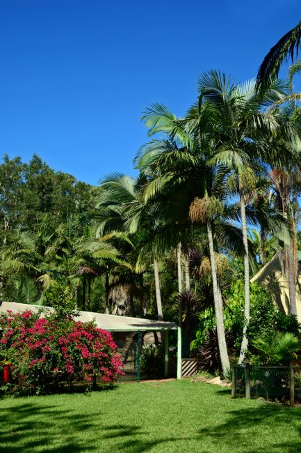 Kaye Menner | Tropical Palms and Bougainvillea