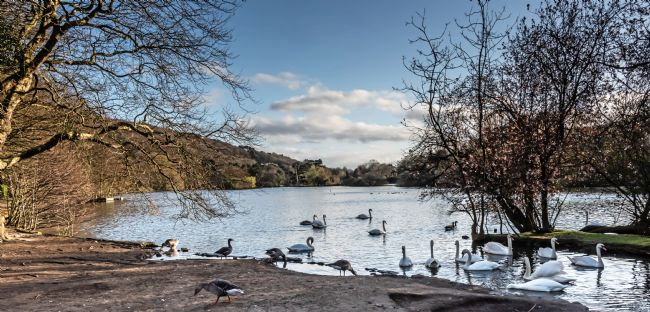 David Hollingworth | Scarborough Mere