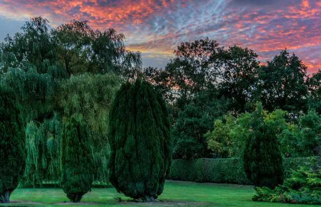 David Hollingworth | Garden Sunset