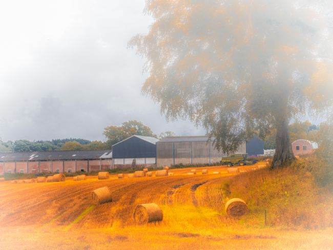 Cyndy Duff | Autumn Mist In Stirlingshire Scotland