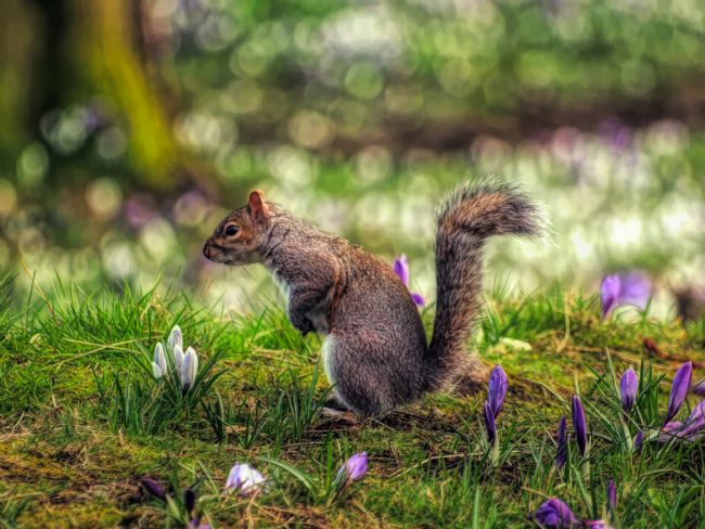 Susan Tinsley | Intense squirrel