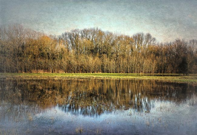 Ian Lewis | Winter Trees Reflected