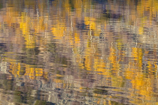 jonathan nguyen | fall abstract 3