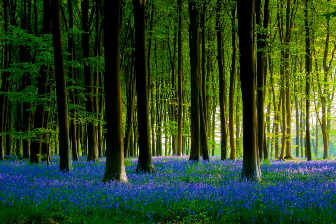 Ken Brannen | Bluebell wood in Micheldever