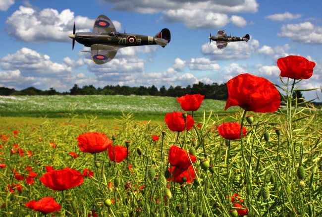 Ken Brannen | Spitfires and Poppy field