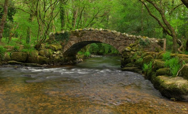 Peter Hemington | Packhorse Bridge in Hisley Wood