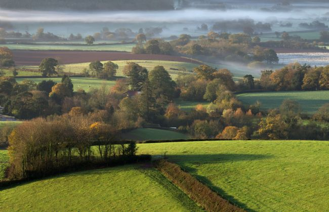 Pete Hemington | Mist in Mid Devon