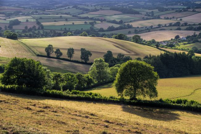 Peter Hemington | View from Raddon Hill
