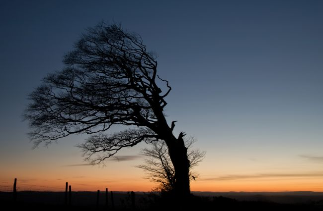 Peter Hemington | Half a tree on Raddon Top