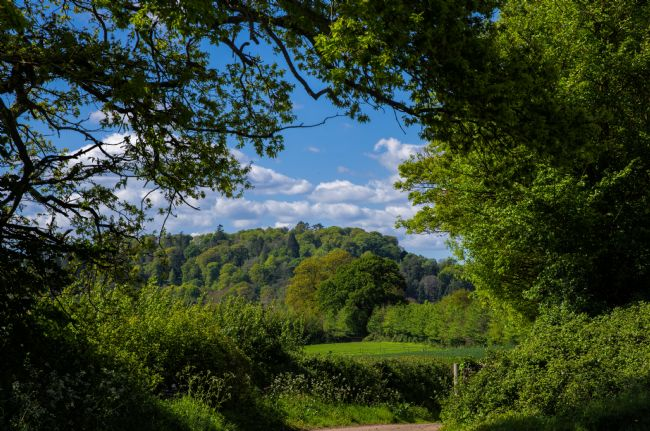 Pete Hemington | Killerton Clump