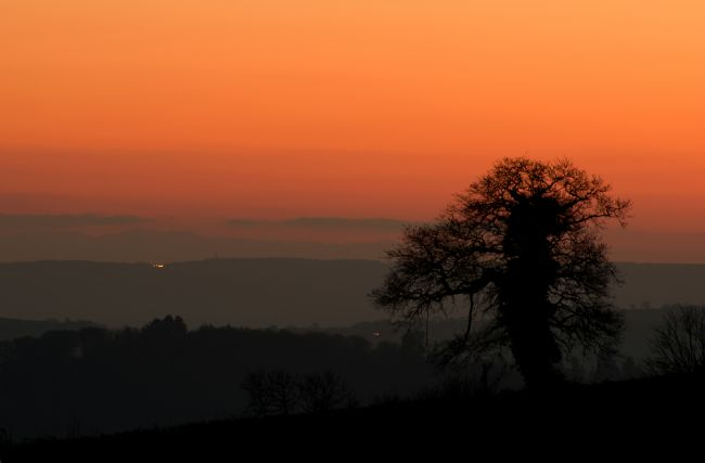 Pete Hemington | Lone tree and Mid Devon sunset