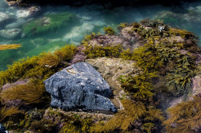 Peter Hemington | Rock pool