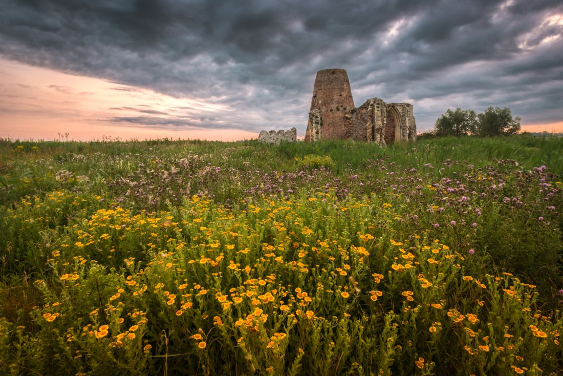 Stephen Mole | Flowers at St Benet's Abbey