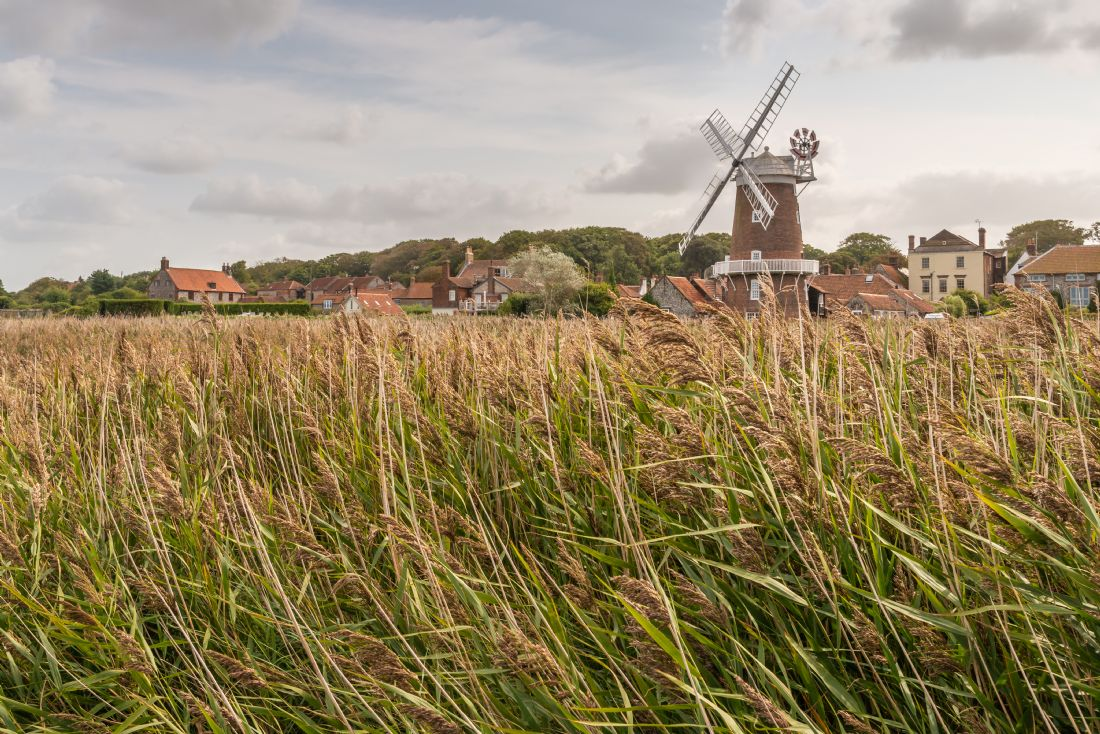 Stephen Mole | Cley Windmill through the reeds