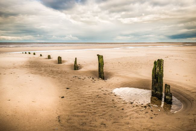 Stephen Mole | Stumps on Brancaster Beach