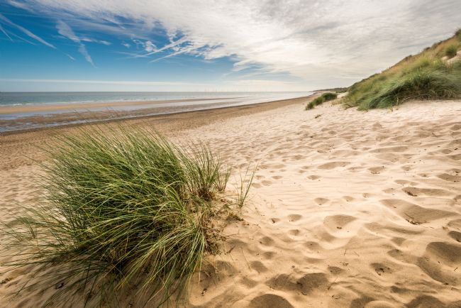 Stephen Mole | Marram grass at Winterton