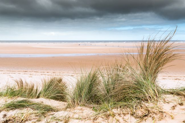 Stephen Mole | Marram grass at Holkham