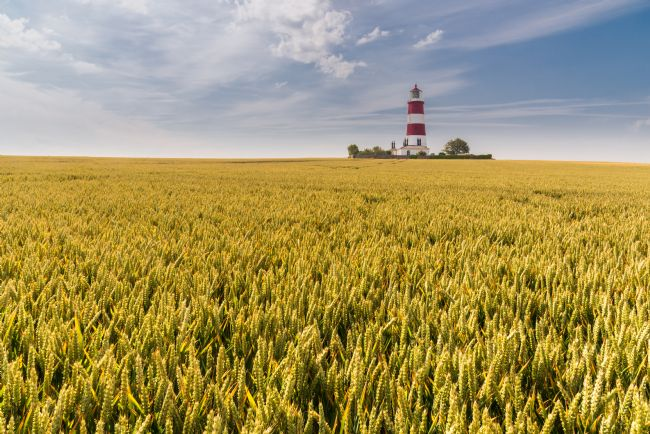 Stephen Mole | Wheat at Happisburgh