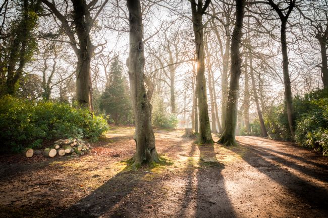 Stephen Mole | Fairhaven Woods
