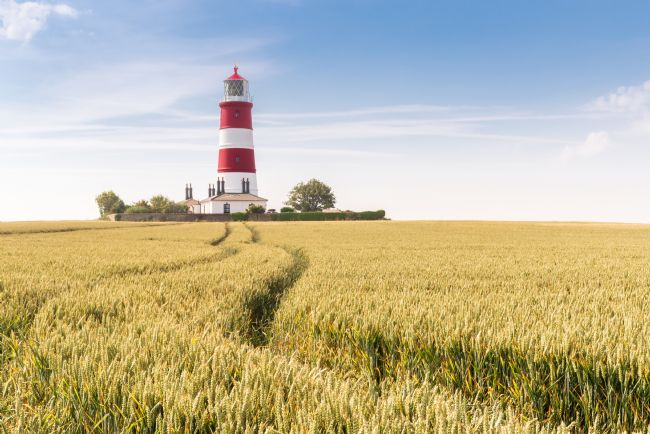 Stephen Mole | Wheat at Happisburgh LIghthouse