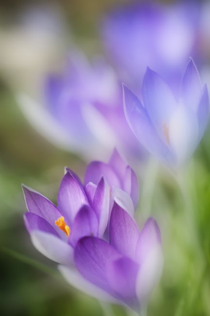 Richard Burdon |  Crocus Fantasy