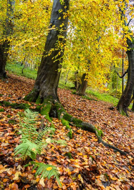 Richard Burdon | Autumn in Millington Woods