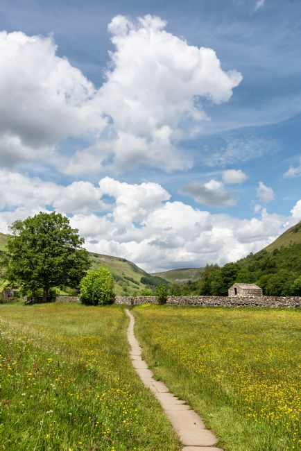 Richard Burdon | Wild Flower Meadows in Swaledale