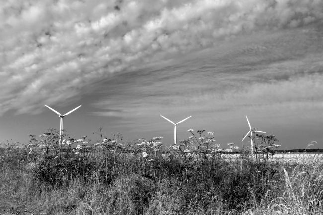 Susan Snow | Wind Turbines in Black and White