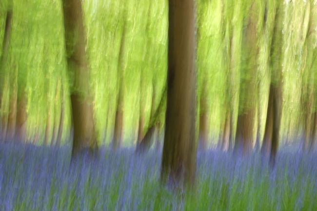 Susan Snow | Abstract Bluebell Wood