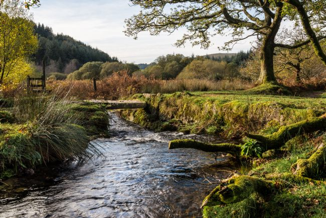 Jean Fry | Narrator Brook - Dartmoor