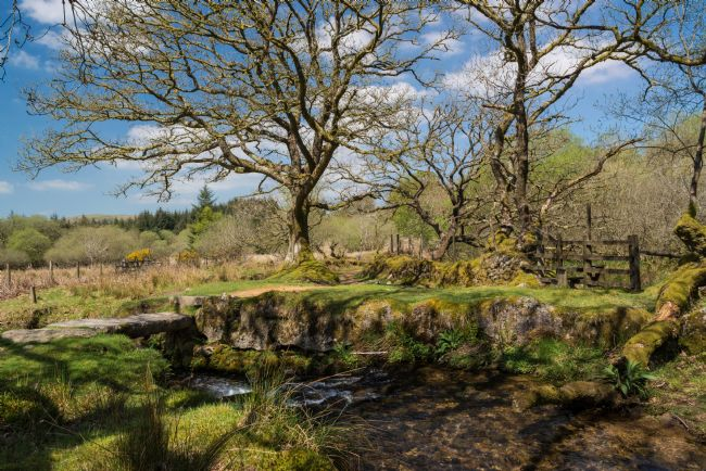 Jean Fry | The Narrator Brook & Clapper Bridge, Dartmoor