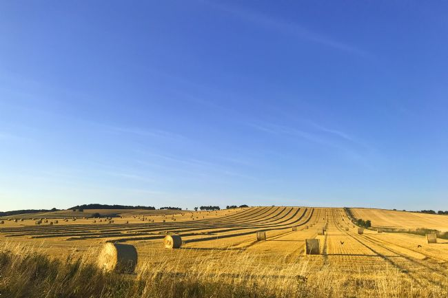 Penny Martin | Harvest Time in Wiltshire