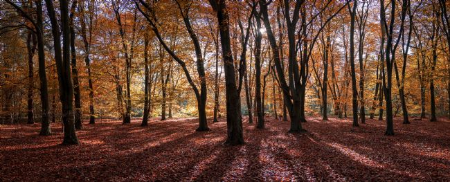 Jan  Murphy | Autumn in Thetford Forest