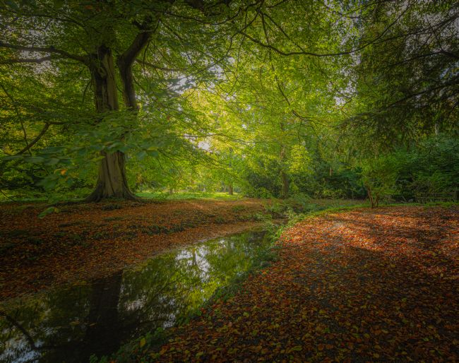 Mark Ingleby | Autumn Woodland