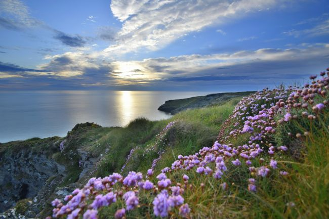 Robert Parsons | Cornwall: In the Pink on the North Coast