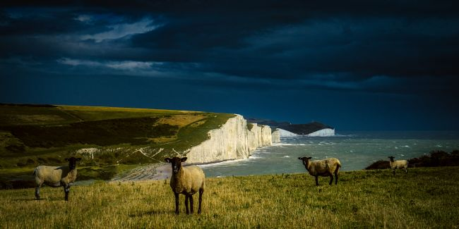 Chris Lord | Four Sheep And Seven Sisters